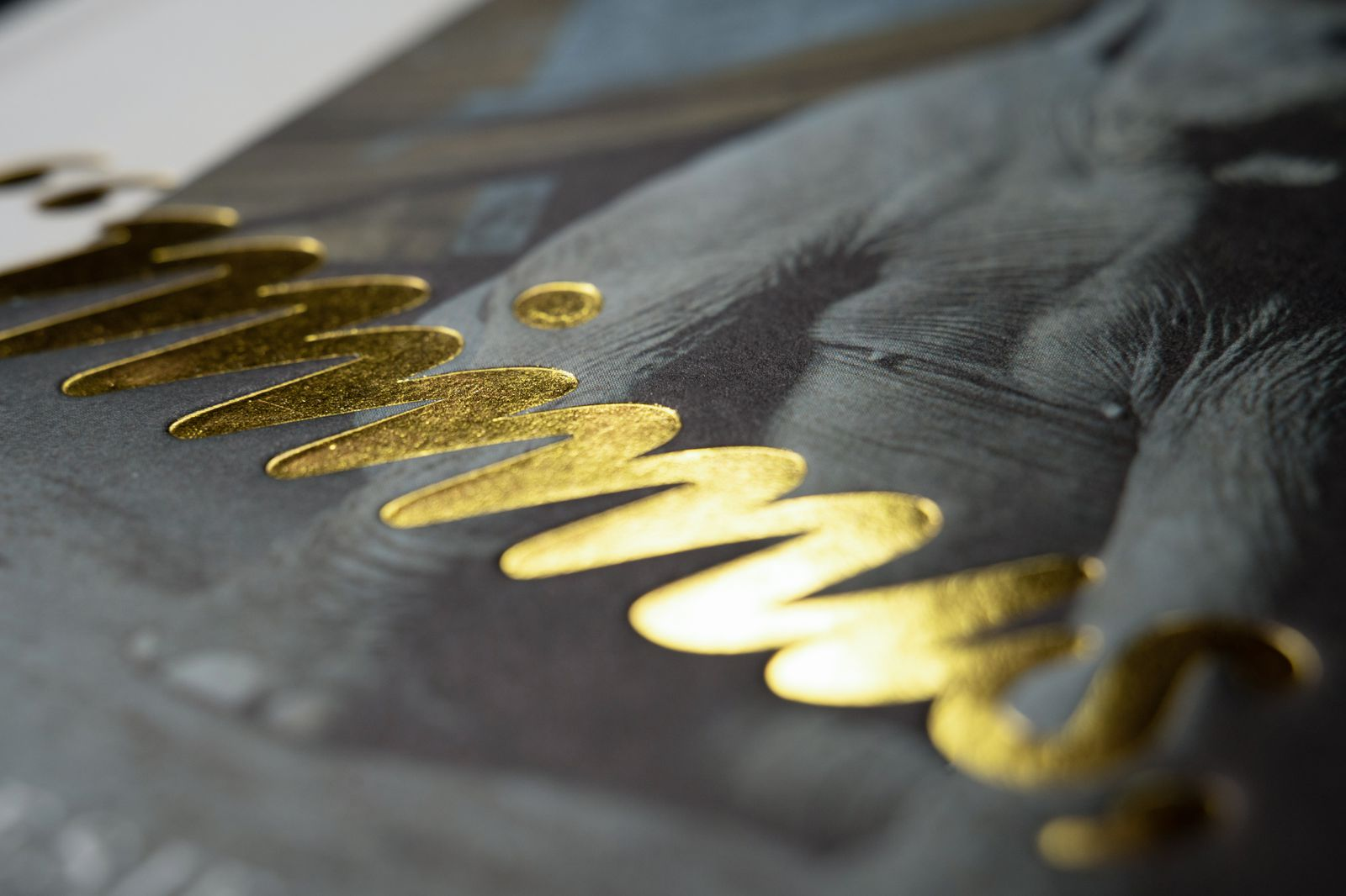 Mimus - Detail 1.jpg