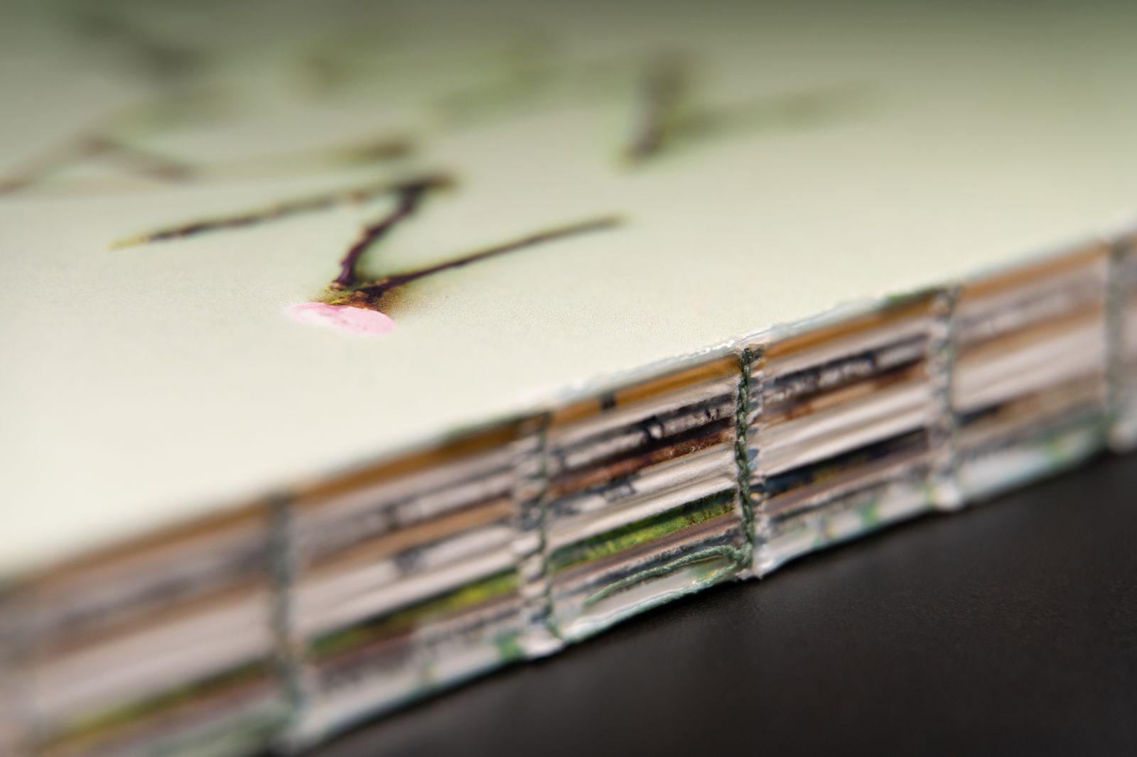 Nature notes - Detail 1.jpg